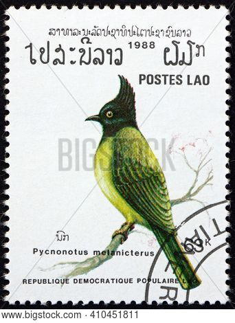 Laos - Circa 1988: A Stamp Printed In Laos Shows Black-capped Bulbul, Pycnonotus Melanicterus, Passe