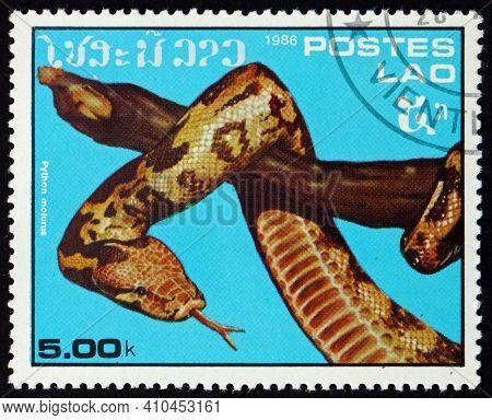 Laos - Circa 1986: A Stamp Printed In Laos Shows Indian Python, Python Molurus, Is A Large, Non-veno