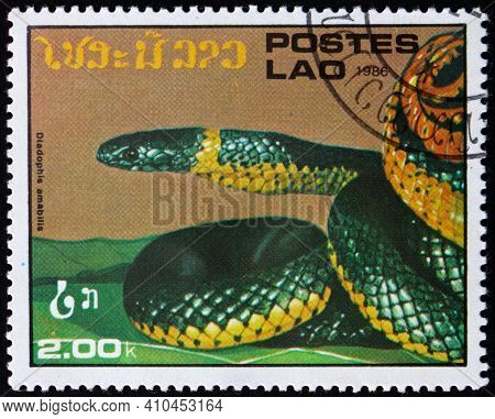 Laos - Circa 1986: A Stamp Printed In Laos Shows Ring-necked Snake, Diadophis Amabilis, Is A Harmles