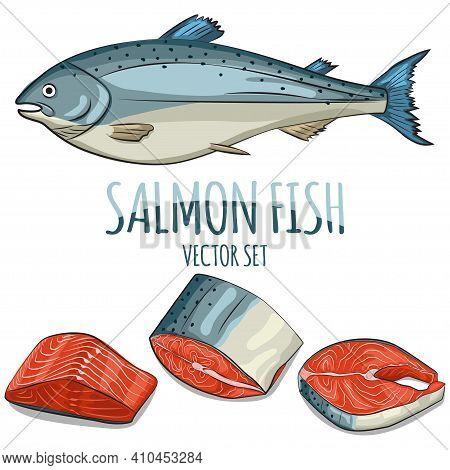 Salmon Fish, Steak, Fillet And Slice Vector Set. Cartoon Hand Draw Illustration Isolated On White Ba