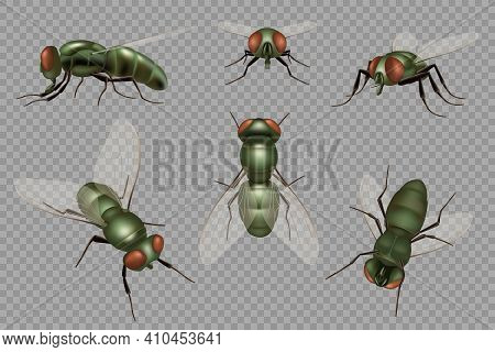 Fly Set. Realistic Dirt Insects Pests Decent Vector Mosquito Illustrations. Fly Insect Pest Buzz, Pa