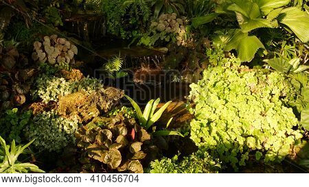 Tropical Plants And Cascade In Beautiful Garden. Various Green Tropical Plants Growing Near Small Ca