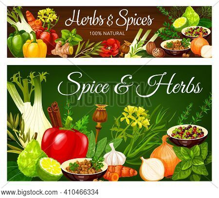 And Herbs Vector Peppercorn, Coriander, Onion And Bay Leaves, Paprika And Fennel. Lime, Curry Leaves