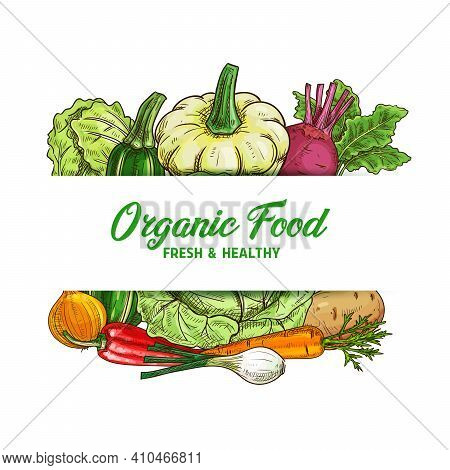 Fresh Vegetable Food Vector Sketch Of Organic Farm Veggies. Green And Napa Cabbage, Carrot, Onion An