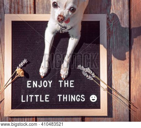 cute chihuahua with a sign that reads enjoy the little things