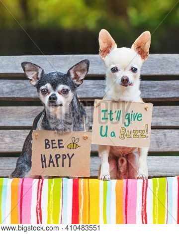 cute chihuahuas sitting on a bench with signs bee happy it will give you a buzz