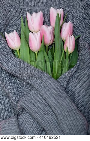 Bouquet Of Pink Pastel Tulips On Grey Knit Sweater Background, Top View Of Pink Tulips Bouquet, Spri
