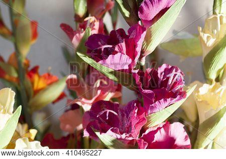 Close-up Of Gladiolus Flowers. Artificial Purple Gladiolus Flowers.