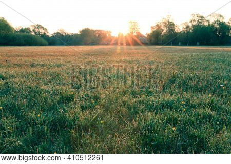 Meadow In Spring To The Morning Sun. Sunbeams Over The Green Grass With Single Yellow Flowers. Trees