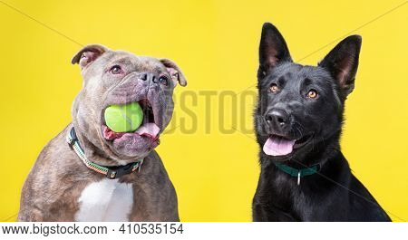 cute dogs isolated in a studio shot with a colorful background