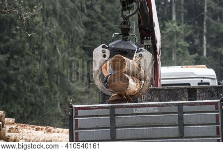 Transport Of Wood By Truck