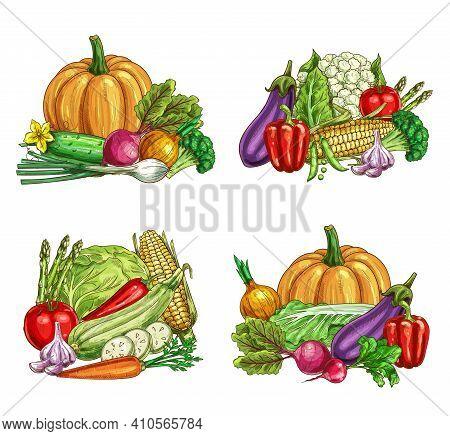 Fresh Farm Vegetable Vector Sketches Of Garden Veggie Food. Ripe Tomato, Carrot, Chilli And Bell Pep