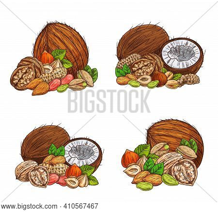 Nuts And Seeds Vector Sketch Almond, Peanuts And Pistachio, Coconut, Hazelnut And Walnut. Engraved V