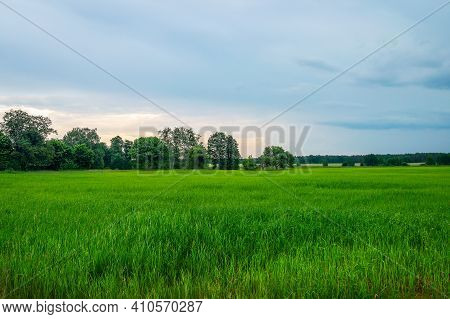 Beautiful Belarusian Summer Landscape With Green Grass, Lush Trees In The Distance And Sunset Cloudy