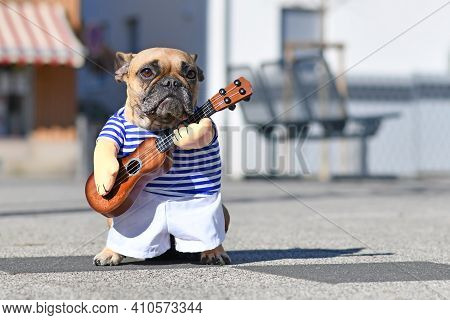 French Bulldog Dog Dressed Up With Street Perfomer Musician Costume Wearing Striped Shirt And Fake A
