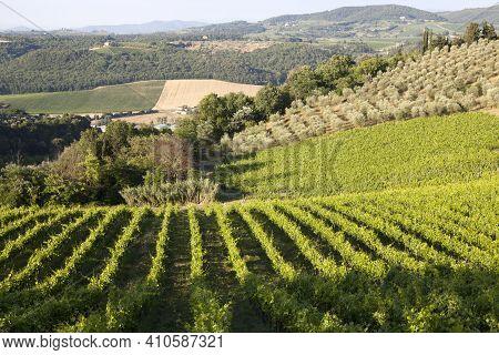 Tavarnelle Val Di Pesa (fi),  Italy - April 21, 2017: Chianti Vineyards, Wine Grapes Growing In Tava