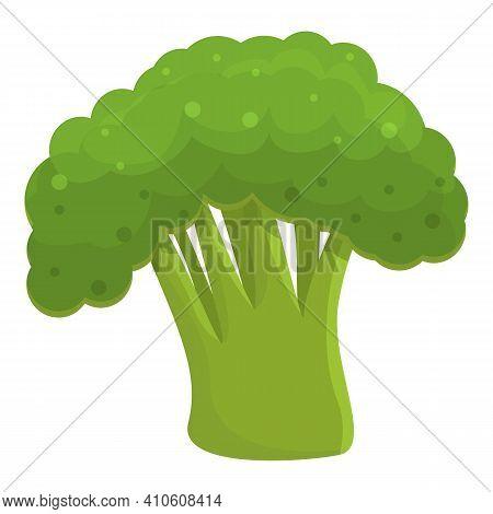 Vitamin Broccoli Icon. Cartoon Of Vitamin Broccoli Vector Icon For Web Design Isolated On White Back
