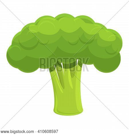 Natural Broccoli Icon. Cartoon Of Natural Broccoli Vector Icon For Web Design Isolated On White Back