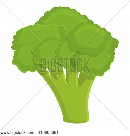 Food Broccoli Icon. Cartoon Of Food Broccoli Vector Icon For Web Design Isolated On White Background