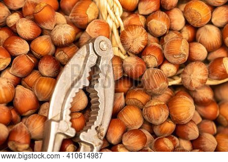 Hazelnuts In A Wicker Basket, Loose Nuts And Iron Tongs For Splitting Nuts. It's Time For The Autumn