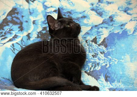 Young Black Cat With Cataract Eye Close Up