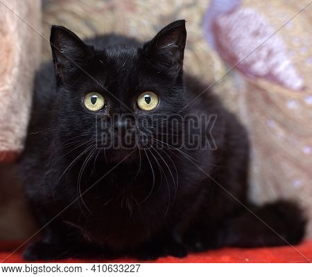 Black Cat With An Attentive Gaze Of Yellow Eyes