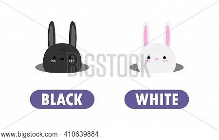 Opposite Black And White, Words Antonym For Children With Cartoon Characters Cute Little Rabbit, Ani
