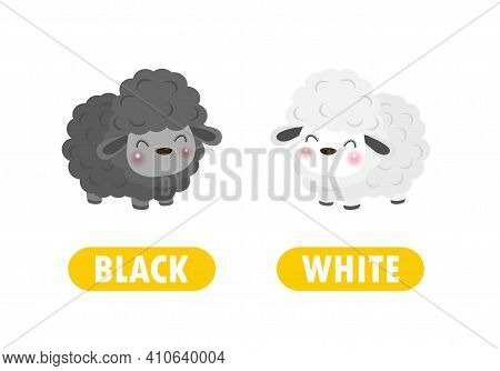 Opposite Black And White Words Antonym For Children With Cartoon Characters Cute Little Sheep, Funny