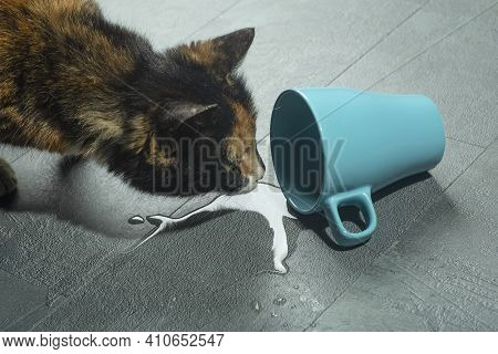 A Cat Near A Fallen Cup Of Water. A Cautious Cat Looks At Water From A Cup That Has Fallen To The Fl