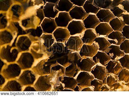 Honeycomb. Hexagon Background Texture, Wax Honeycomb From A Bee Hive. Honeycomb Macro Shot Consistin
