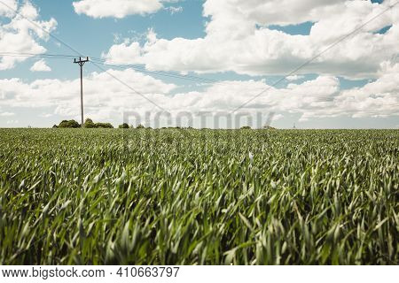 Large Farmers Field Growing Crops With A Clouds And Light Blue Sky Background. Green Crops Growing I