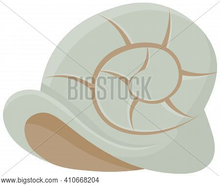 Shell Isolated On White Background. Chitin Structure Protecting Snail. Curl Carapace With Assorted D