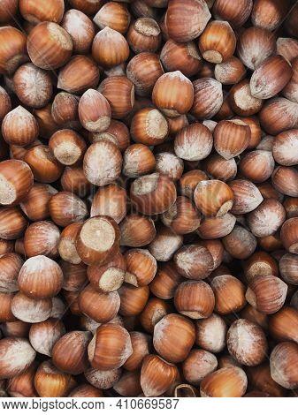 Macro Photo Hazelnut. Photography Nature Food Hazelnuts In Shells. Hazelnut Background.