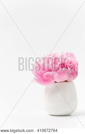 Innocence And Delicacy Minimalistic Valentine Day Concept, One Single Flower Of Pink Peony In Small