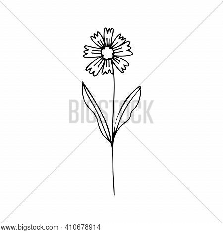 Single One Line Drawing Of Cornflower Flower. Garden Logo And Cornflower Decorative Concept For Home