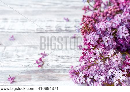 Purple Lilac Spring Branches Of Blooming Lilac Festive Bouquet Of Flowers With Copy Space. Purple Li