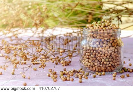 Dried Coriander Seasoning Seeds Unassembled On The Stems And Collected In A Glass Jar Stand On A Pla
