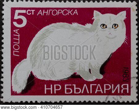 Republic Of Bulgaria - Circa 1983: Postage Stamp Turkish Angora - Felis Silvestris Catus Printed In
