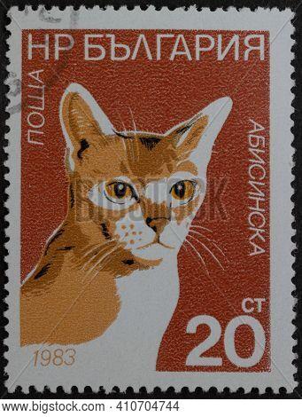 Republic Of Bulgaria - Circa 1983: Postage Stamp Abyssinian - Felis Silvestris Catus Printed In Repu