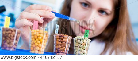 girl in the laboratory of food quality tests legumes grain. Different varieties of lentils in a laboratory breeding and genetic engineering