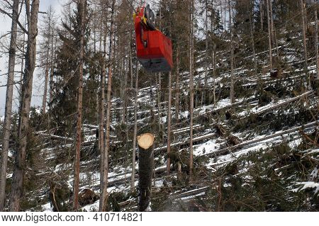 A Forest Cableway For Transportation