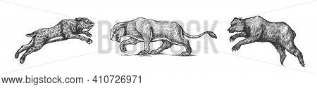 Cave Bear And Lion. Panthera Saber Toothed Tiger. Prehistoric Mammals. Extinct Animal. Vintage Anima