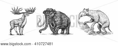 Mammoth Or Extinct Elephant, Irish Elk Or Ground Deer And Palorchestes. Marsupials Of The Family Pal