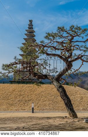 Pine Tree With Seven Story Pagoda In Background At Jungang-tap Historical Park.