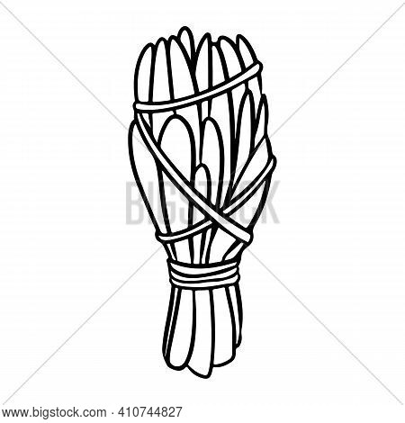 Sage Smudge Stick With Threads Hand-drawn Doodle Isolated Icon. Vector Plant Leaves Image. White Sag