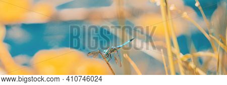 Blue dasher dragonfly at summer pond panoramic banner.