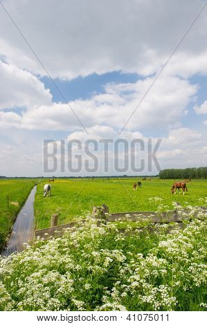 Spring with young foal and horses in the green meadows behind de cow parsley