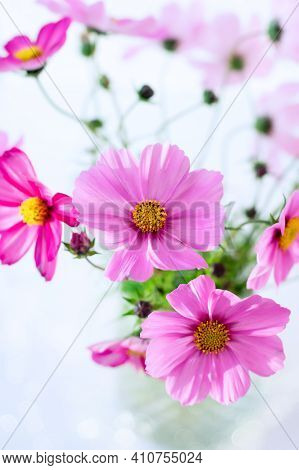 Fresh Summer Bouquet Of Pink Cosmos Flowers On Pink Background. Floral Home Decor. Vertical Crop.