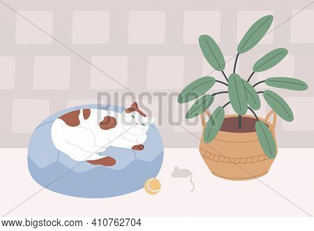 Relaxed Cat Sleeping In Its Bed In Cozy Room With Plant. Cute Sleepy Pet Lying On Cushion At Home. C
