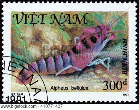 Vietnam - Circa 1991: A Stamp Printed In Vietnam Shows Tiger Pistol Shrimp, Alpheus Bellulus, Shellf